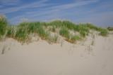 les dunes à Cayeux sur mer