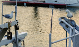 Dieppe, harbour