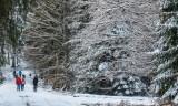 la forêt des Pandours