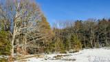 forêt du Mont Ste Odile