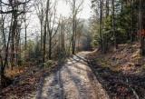 Forêt de La Vancelle