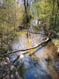 la rivière Ehn au printemps