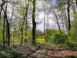 la forêt de Geispolsheim-Hattisheim