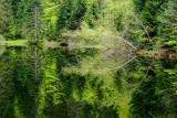 l'étang de Sèchemer, La Bresse