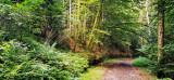 la forêt de Breitenau