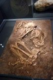 Burial of a woman and a dog, Early Natufian culture, 14,500 years ago - Eynan, Hula Valley - 4315