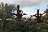 Iron Trees (2016) - Ai Weiwei - 5039