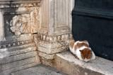 Gallery: Dubrovnik - Cats