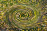 Fall Spin Blur