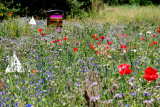 Ruches, abeilles et fleurs - Hives, bees and flowers