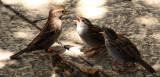 Birds 2020