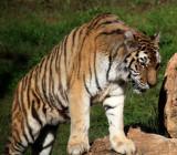 Kiryat Motskin Zoo