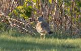 Rare Birds in WP