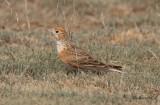 Birdtrip to the Kazakhstan 2019