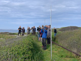 Syke's warbler - twitchers & dippers