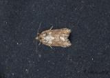 Unidentified moths