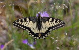 Latest butterfly pictures