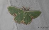 Nattfjärilar / Moths