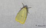 Vit borstspinnare - Four-dotted Footman (Cybosia mesomella)