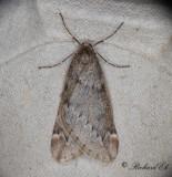 Oenochrominae