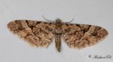 Lansettvingad malmätare (Eupithecia lanceata)