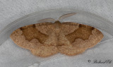 Pudrad skymningsmätare - Barred Umber (Plagodis pulveraria)