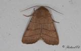 Streckfly - Treble Lines (Charanyca trigrammica)