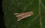 Psychidae ( Säckspinnare )