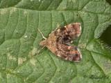 Bredvingad nässelmal (Anthophila fabriciana)