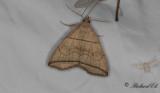 Spetsstreckat tofsfly - Small Fan-foot (Herminia grisealis)