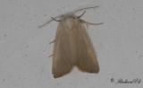Vasstråfly - Fen Wainscot (Arenostola phragmitidis)