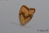 Lönnbredvecklare (Acleris forsskaleana)