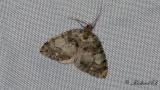 Vattrad fältmätare - July Highflyer (Hydriomena furcata)