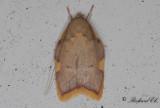 Ekpraktmal (Carcina quercana)
