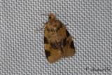 Rostbrun bredvecklare (Epagoge grotiana)