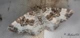 Jämnbandad fältmätare - Wood Carpet (Epirrhoe rivata)