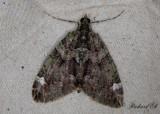 Brungrön fältmätare - Red-green Carpet (Chloroclysta siterata)