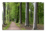 De bossen van de Merode