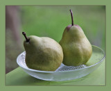 A Pair of Pears.