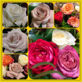 Bouquet Collage of Florist Roses