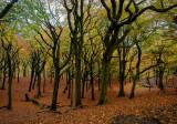 Landscape - Tandle Hills in Autumn
