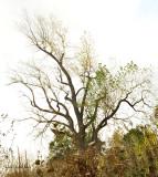 L'arbre qui annonce le printemps