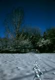 Le sentier des neiges