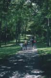 Sentier sur le Mt-Royal