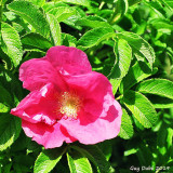 Une Fleur rouge