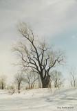RdP_arbres03.jpg