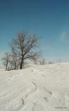 RdP_arbres10.jpg