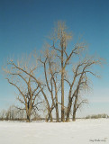 RdP_arbres13.jpg