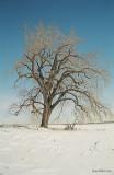 RdP_arbres14.jpg