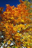 Couleurs_automne.jpg